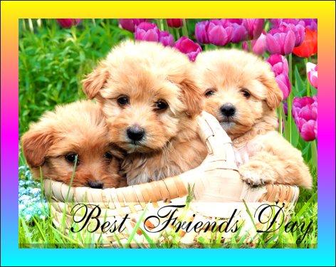 June 08 - Best Friends Day