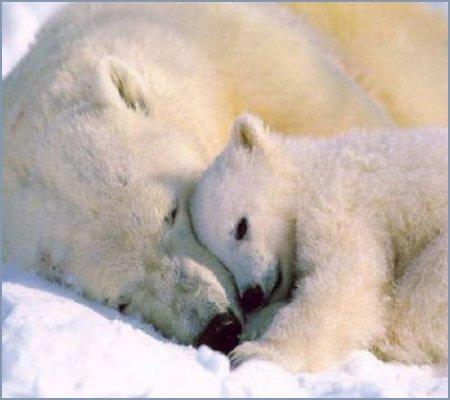 Feb. 25 - Cuddle Day